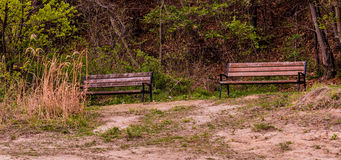 Wooden park benches in woodland park Stock Photo