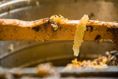 A wooden partition stained with honey Stock Image