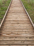 Wooden Path. Wooden plank path leading between the vegetation Stock Image