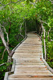 Wooden Path. In the forest Stock Photography