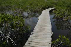 Wooden Path. Through the swamp, surrounded by plants and water stock photos