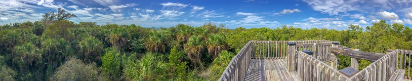 Wooden path across the Everglades, panoramic view.  Stock Image