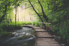 Wooden path across river. In dark green forest Stock Image