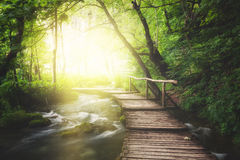 Wooden path across river in green forest. Wooden path across river in summer green forest Royalty Free Stock Photography