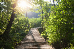 Wooden path across river. In sunny green forest stock photography