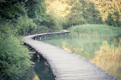 Wooden path across river. In sunny green forest Royalty Free Stock Image