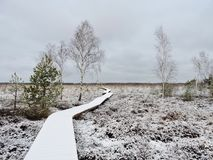 Snowy path in winter swamp, Lithuania. Wooden path in Aukstumalos swamp in west path of Lithuania Royalty Free Stock Photography