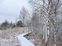 Snowy path in winter swamp, Lithuania. Wooden path in Aukstumalos swamp in west path of Lithuania Stock Photography