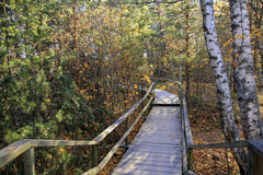 Wooden path in the autumn forest Royalty Free Stock Image
