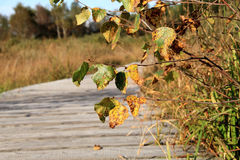 Wooden path in the autumn mood Royalty Free Stock Images