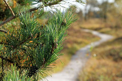 Wooden path in the autumn mood Stock Images