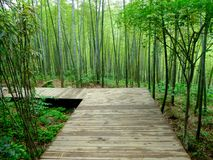 A wooden path through a bamboo forest Royalty Free Stock Photos
