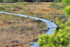 Wooden path on a bog Stock Photography