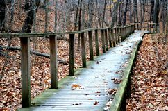 Wooden path bridge. Old wooden path bridge in forrest Royalty Free Stock Photo