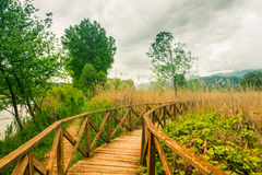Wooden path on cane thicket and vegetation Stock Photography