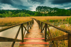 Wooden path on cane thicket and vegetation Royalty Free Stock Photo
