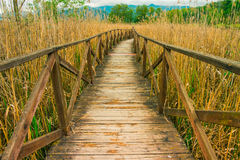 Wooden path on cane thicket and vegetation Royalty Free Stock Images