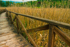 Wooden path on cane thicket and vegetation Stock Image