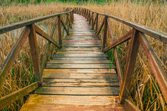 Wooden path on cane thicket and vegetation Royalty Free Stock Photos
