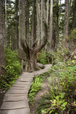 Wooden Path. Cape Flattery in the state of Washington is the most northwest point in the contiguous United States. This trail on the cape takes you through some Royalty Free Stock Photography