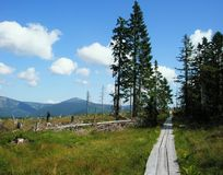 Wooden path in czech mountains Royalty Free Stock Photography
