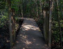 Wooden path in the dark mangrove forest. Gates of the wooden path into the dark mangrove forest Stock Photography