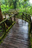 A wooden path. Doi inthanon national park, Thailand Royalty Free Stock Images