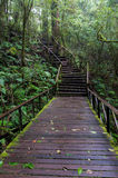 Wooden path. A wooden path, doi inthanon national park, Thailand Royalty Free Stock Images