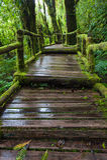 A wooden path. Doi inthanon national park, Thailand Stock Image
