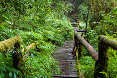 Wooden path. A wooden path, doi inthanon national park, Thailand Royalty Free Stock Photography