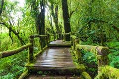 Wooden path. A wooden path, doi inthanon national park, Thailand Stock Photos