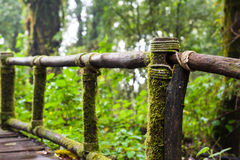 Wooden path. A wooden path, doi inthanon national park, Thailand Stock Image