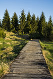 Wooden path. Ending somewhere in forest. View emits purpose full of hope and good Royalty Free Stock Images