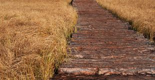 Wooden path in a field of rough boards. Stock Images
