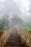 Wooden path in the Forest. Wooden path with fog in the Forest Royalty Free Stock Photography