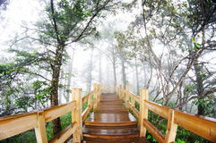 Wooden path in the Forest Stock Photo