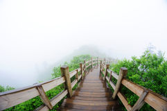 Wooden path in the Forest. Wooden path with fog in the Forest Royalty Free Stock Images