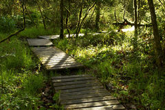 Wooden Path Through Forest. A wooden path through a forest stock images