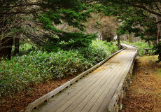 Wooden path in forest Stock Photography