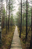 Wooden path. A wooden path in the forest Stock Images