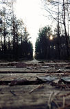 Wooden path. A wooden path in the forest stock photography