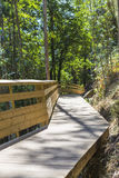 Wooden path in the forest Royalty Free Stock Image