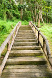 Wooden path through the forest. Stock Images