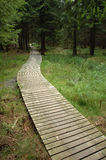 Wooden path in forest Royalty Free Stock Images