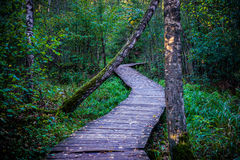 Wooden path in forest Stock Images