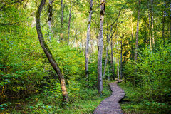 Wooden path in forest Royalty Free Stock Photography