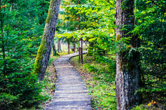 Wooden path in forest. Fall season path Stock Images