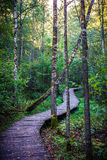 Wooden path in forest Royalty Free Stock Photo