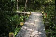 A wooden path through a forest Stock Image
