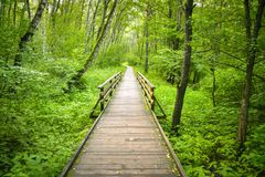 Wooden path in the forest stock images